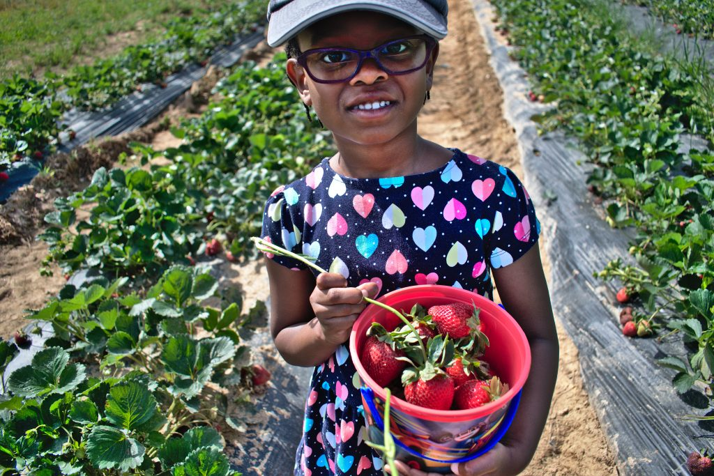 Strawberry season is here and I can't stay out of the fields!  Here are 7 simple ways to make the most of these lovely, fresh-picked fruits.
